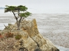 lone-cypress-monterey-california