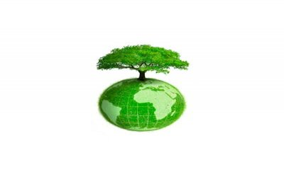 Forest Stewardship Council (FSC): che cosa vuol dire?