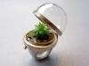 Un anello con pianta sotto vetro di with Cbijoux