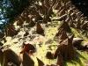 Ceiba Speciosa dal tronco- pieno di aculei