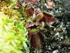 Alcune stupende piante carnivore
