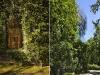 due immagini dei muri coperti dal glicine