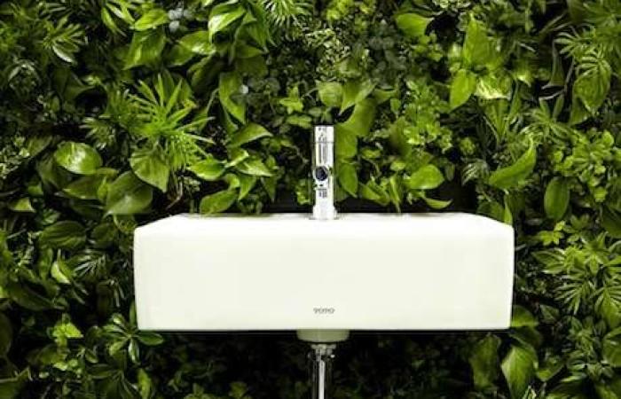 Bagno vegetale tuttogreen - Il carbone vegetale fa andare in bagno ...