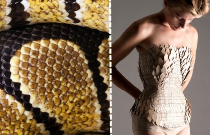 stefanie nieuwenhuyse: il vestito a squame di serpente