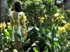 pollinator frock attira api e insetti grazie a stampe di zucchero