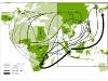 Rotte commerciali di grandi dimenzioni (>500kg) - sequestri di avorio (2000-2008)