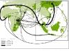 Rotte commerciali di grandi dimenzioni (>500kg) - sequestri di avorio (2012-2013)