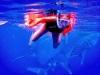 Nuotare tra squali tigre