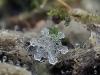 fiocchi-di-neve-immagini
