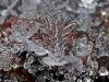 fiocco-neve