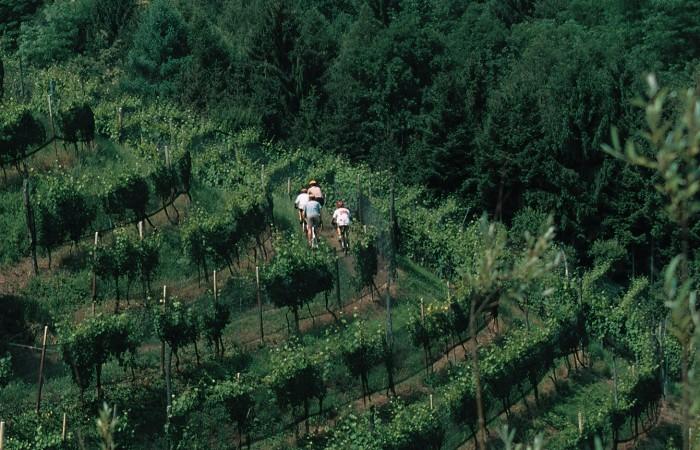 Friuli Venezia Giulia: bici-e-vigneti