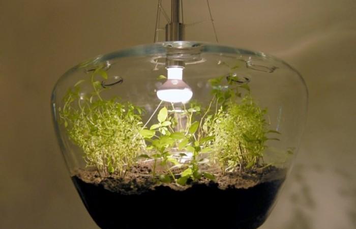 glasshouselamp