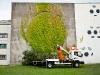 graffito botanico