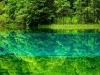 Lago 5 fiori