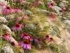 Vincitore assoluto: Il mio giardino Fotografia: Rosanna Castrini