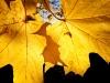 """Un'altra immagine della sezione """"Young garden photographer of the yea"""": Foglie d'oro. Fotografia: Jasmine Clegg"""