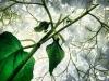 La bellezza delle piante: Ortensie nel mio giardino. Fotografia: Andrzej Bochensk