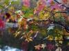 foglie d'autunno, particolare