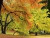 foliage al Central Park