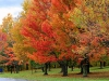 foliage nel Vermont