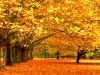 alberi in pieno 'cambio d'abito'