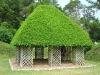 ficus_house