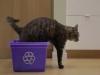 Norman, un gatto dallo spirito green