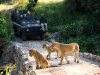 Kruger National Park (Sudafrica)