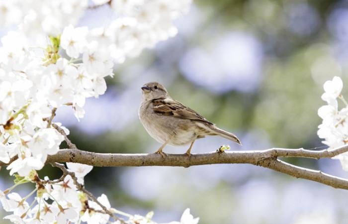 l'uccellino sul ramo