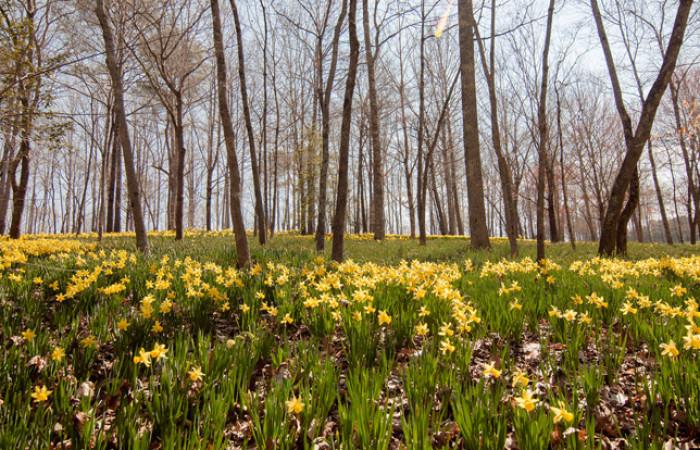 la foresta e il prato in fiore