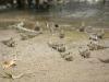 mudskippers-jpg-492x0_q85_crop-smart