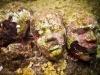 le sculture subacquee diventano l'habitat di spugne e coralli