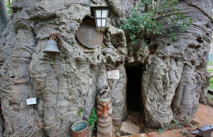 Il pub nel baobab, l'entrata