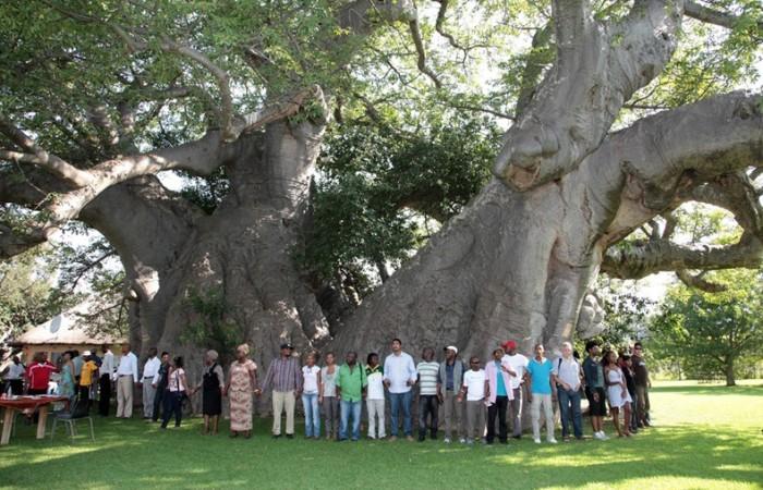 Il pub nel baobab, l'esterno