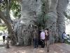 Il pub nel baobab