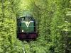 il meraviglioso tunnel verde è ferroviario