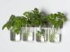 Il vaso Manchester Wall per mantenere fresche le erbe aromatiche usate in cucina