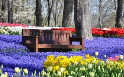Ad aprile c'è il Festival dei tulipani ma non è in Olanda… è in Turchia!