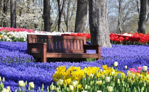 Photo of Ad aprile c'è il Festival dei tulipani ma non è in Olanda… è in Turchia!
