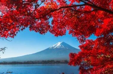 Foliage, quando le foglie ne combinano di tutti i colori: dove ammirare il cambio d'abito della Natura