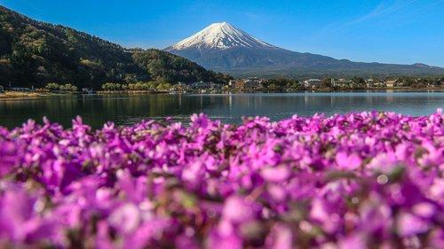 Photo of In Giappone impazza lo Shiba-Sakura Festival, ovvero il Festival del Muschio Rosa