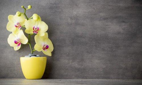 Photo of Come curare le orchidee in casa e in balcone