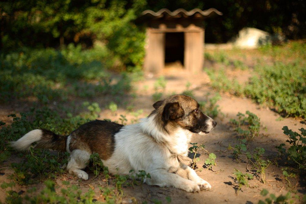 Photo of Perché adottare un cane fa bene a tutti