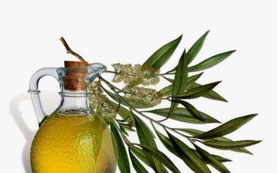 Tea tree oil: proprietà dell'olio di melaleuca