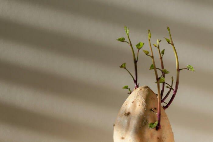 crescere una pianta da uno scarto