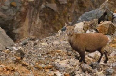 Un patrimonio naturalistico unico: il Parco Nazionale dello Stelvio