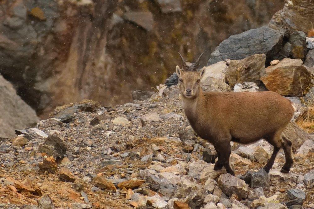 Photo of Un patrimonio naturalistico unico: il Parco Nazionale dello Stelvio