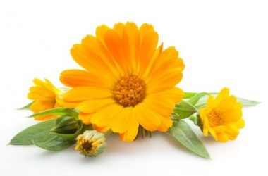 Calendula officinalis: scopriamo l'olio e le creme derivanti dai fiori di questa pianta