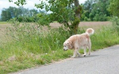 Meno animali abbandonati in Italia quest'estate