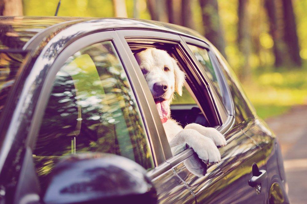 Photo of Rimedi per il mal d'auto del cane: come prevenire e curare questo disturbo